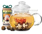 Primula 40-Ounce Blossom Glass Teapot with Loose Tea Infuser and 12 Flowering Green Teas