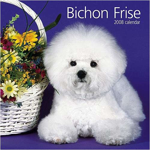 Bichon Frise Wall Calendar: A happy little dog with white curly hair,