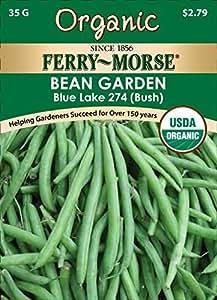- 3162 Orgánica haba Seeds, Bush Blue Lake 274 (28 Gram paquetes