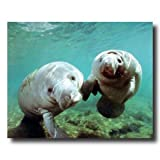 Pair Of Manatee Ocean Sea Life Whale Animal Wall Picture 16x20 Art Print
