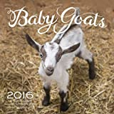 Baby Goats 2016: 16-Month Calendar September 2015 through December 2016