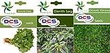 DCS Arave Sag, Dantu Sag & Doob Grass (3 Pack 50 Seeds Each)