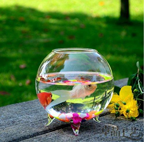 Vase boule en verre transparent pour plante fleur for Acheter aquarium boule