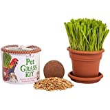 Priscilla's Kitty Cat Grass Kit - Grow Your Own Grass
