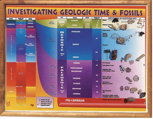 American Educational Investigating Geological Time and Fossils Chart Transparency