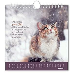 Auf leisen Pfoten 2017: Postkartenkalender