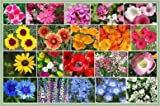David's Garden Seeds Wildflower All Annual Seed Mix DGS111OPE (Multi) 1000 Open Pollinated Seeds