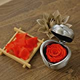 MFFD Handmade Preserved Flower Rose, Never Withered Roses, Upscale Immortal Flowers, Fresh Roses, Eernal Life Flowers for Love Ones, Gift for Valentine's Day, Anniversary, Birthday (Red Rose)