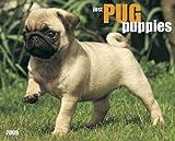 Pug Puppies 2009 Calendar (Just)