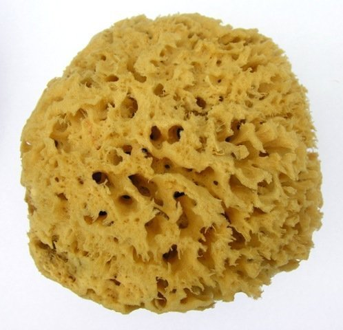 spugna-marina-a-nido-dape-morbida-102-114cm-non-candeggiata