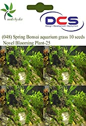 DCS (048) Spring Bonsai Aquarium grass 10 Seeds Novel Blooming Plant-25