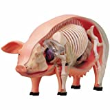Learn About Pig Anatomy - Build Your Own 9 Inch Model With 19 Detachable Parts (Age 8+)