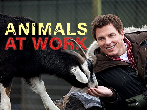 Animals at Work - Season 2