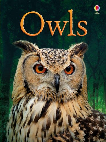 Owls (Beginners)
