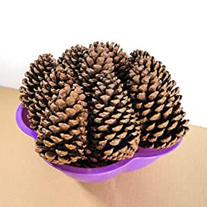 Amazon.com: Natural Large Pine Cones for Crafts
