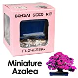 Eves Miniature Azalea Bonsai Seed Kit, Flowering, Complete Kit to Grow Azalea Bonsai from Seed