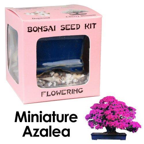 eves-miniature-azalea-bonsai-seed-kit-flowering-complete-kit-to-grow-azalea-bonsai-from-seed