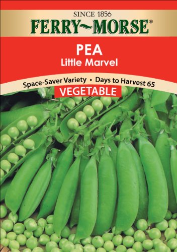 Ferry-Morse Seeds 1454 Peas - Little Marvel 28 Gram Packet