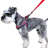 Dog Leash Harness,URPOWER Adjustable & No-Pull Leash Set & Heavy Duty Denim Dog Leash Collar for Small and Large Dog, Perfect for Daily Training Walking Running (Small 5-20lbs)