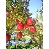 リンゴは癌にさえ効果がある