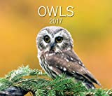 img - for Owls 2017 book / textbook / text book