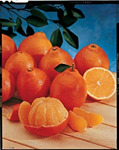 Florida Honeybell Oranges (Tangelos) by Organic Mountain