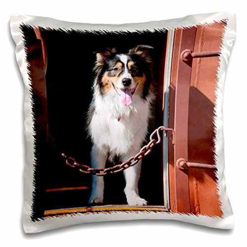 danita-delimont-dogs-australian-shepherd-in-a-train-car-16x16-inch-pillow-case-pc-230324-1