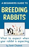 img - for A Beginners Guide to Breeding Rabbits: What to expect when your rabbit is expecting book / textbook / text book