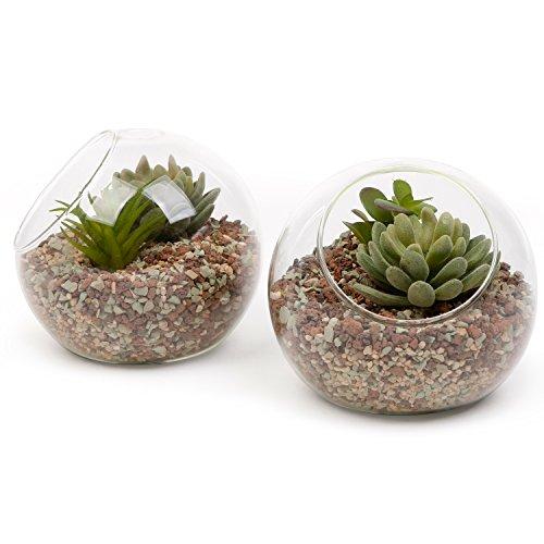 small-glass-ball-terrarium-tabletop-air-plant-display-globe-set-of-2