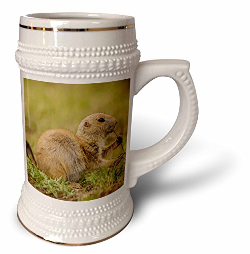 Danita Delimont - Animal - Oklahoma, Wichita Mountains. Aggressive black-tailed prairie dog. - 22oz Stein Mug (stn_231461_1)