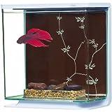 Marina Betta Contemporain Aquarium, 3 l