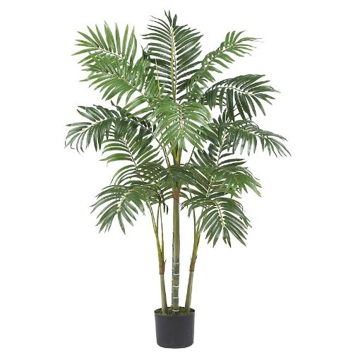 4′ Areca Palm Silk Tree