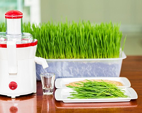 Hard Red Wheat Premium Wheatgrass/ Cat Grass Seeds - High Germination. Excellent For Shots, Juicers, Trays, Kits and Planters. Stay Fresh Re-sealable Packaging. Grown in USA - Bonus How to Grow eBook (Non Gmo Wheatgrass Seeds compare prices)