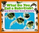 img - for What Do You Call a Baby - Crab? And Other Baby Ocean Creatures book / textbook / text book
