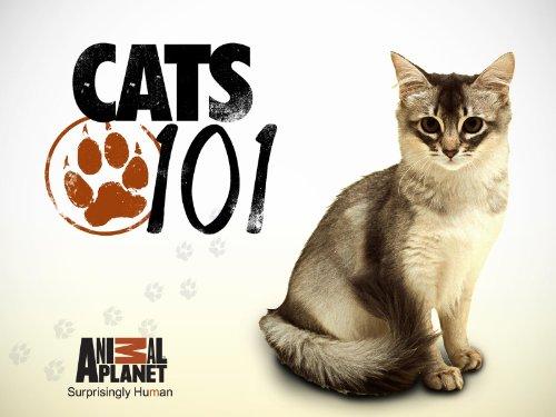 Cats 101 Season 3,