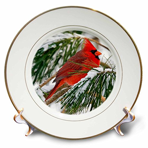 3dRose cp_112146_1 Red and Black Cardinal Perched in Snowy Pine Tree-Porcelain Plate, 8-Inch