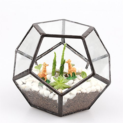 clear-pentagon-dodecahedron-glass-geometric-terrarium-succulent-plant-terrarium