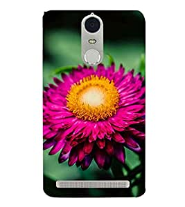 PINK BLOOMING FLOWER DEPICTING THE BEAUTY OF NATURE 3D Hard Polycarbonate Designer Back Case Cover for Lenovo K5 Note