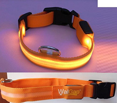 Led Flashing Lights Dog Collar Nylon (Orange, Large)