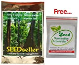 SEED Seller: Extraordinarily Durable, Famous Nilambur Teak Tectona grandis Seeds for growing (50)