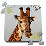 Angelique Cajam Safari Giraffes - South African Giraffe head face sky background - 10x10 Inch Puzzle (pzl_20123_2)