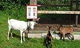 2er Tierfutterautomat Automat f�r Fischfutter Wildfutter usw. inkl. Aussengeh�use