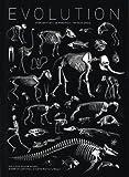echange, troc Jean-Baptiste de Panafieu - Evolution