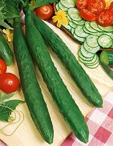 Orient Express Hybrid Cucumber Seeds - Cucumis Sativus - 0.5 Grams - Approx 17 Gardening Seeds - Vegetable Garden Seed
