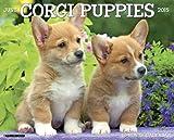 Just Corgi Puppies 2015 Wall Calendar