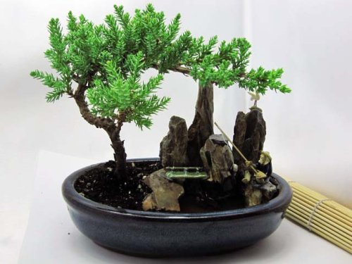 9greenbox Bonsai Juniper Tree Zen Garden With Pool