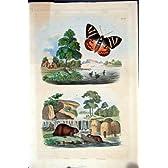 1839 の H/c の自然史 *081 の蝶及びビーバーのダム