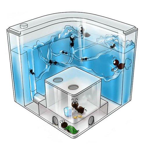 New-Advanced-Ant-Nursery-Farm-Maze-Blue-Gel-Live-Ant-Habitat-With-Feeding-System