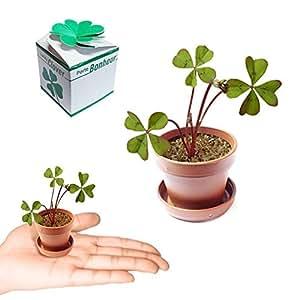 Trèfle à quatre feuilles - Porte bonheur - 4 leaf clover - Lucky clover - Fer à cheval - Grigri