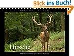 Hirsche (Wandkalender 2014 DIN A3 que...